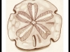 kims-sand-dollar-custom-tattoo